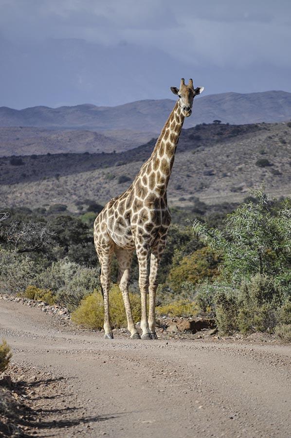 Rietfontein Guest farn nature042 copy