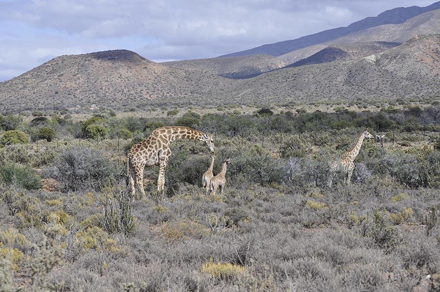 Rietfontein Guest farn nature045 copy