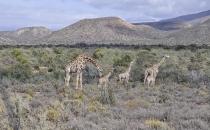 Rietfontein Guest farn nature043 copy
