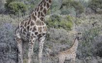 Rietfontein Guest farn nature044 copy