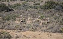 Rietfontein Guest farn nature054 copy