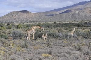 Rietfontein Guest Farm Nature