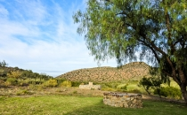 Steenbok view